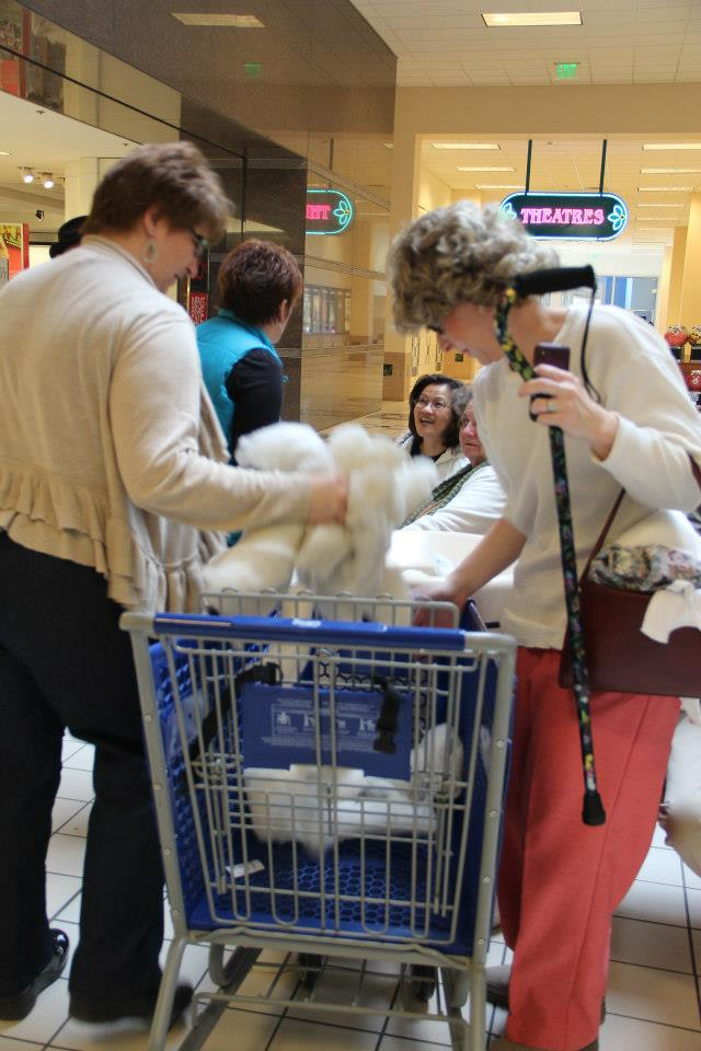 47 PF 2013 - We used a shopping cart to take Robin's stuffing to the garbage can. She even stuffed her socks!.jpg